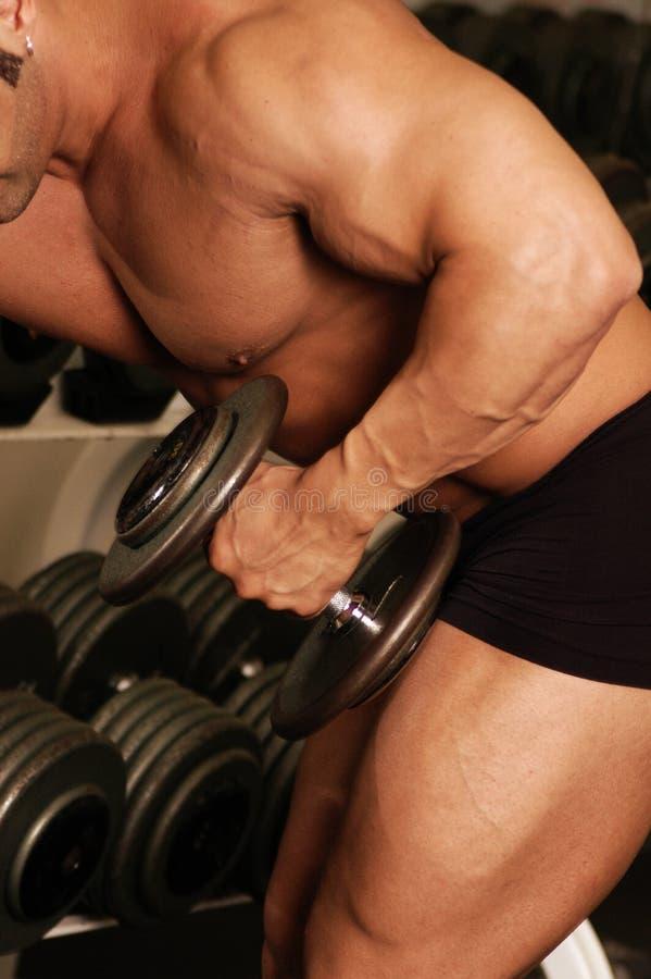 Gym body stock photography