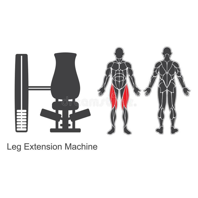 Gym leg extension machine royalty free illustration