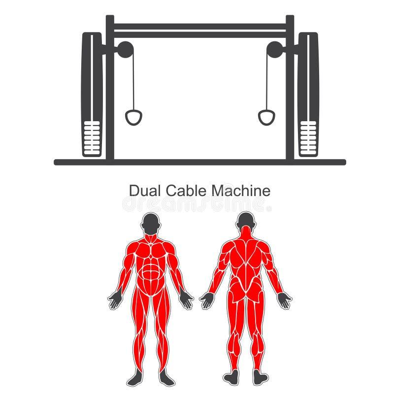 Gym podwójna kablowa maszyna royalty ilustracja