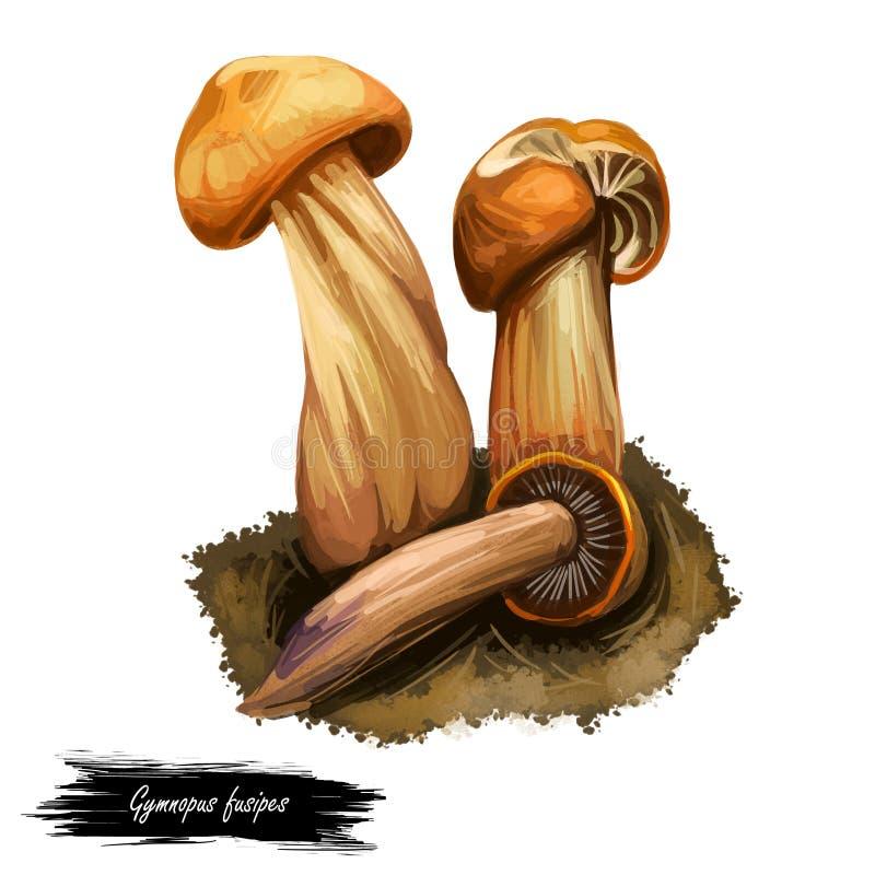 Gymnopus fusipes Collybia grzyb gilowany w Europie i często rośnie w dużych skupiskach. Jadalny grzyb wyizolowany na białym. S ilustracji