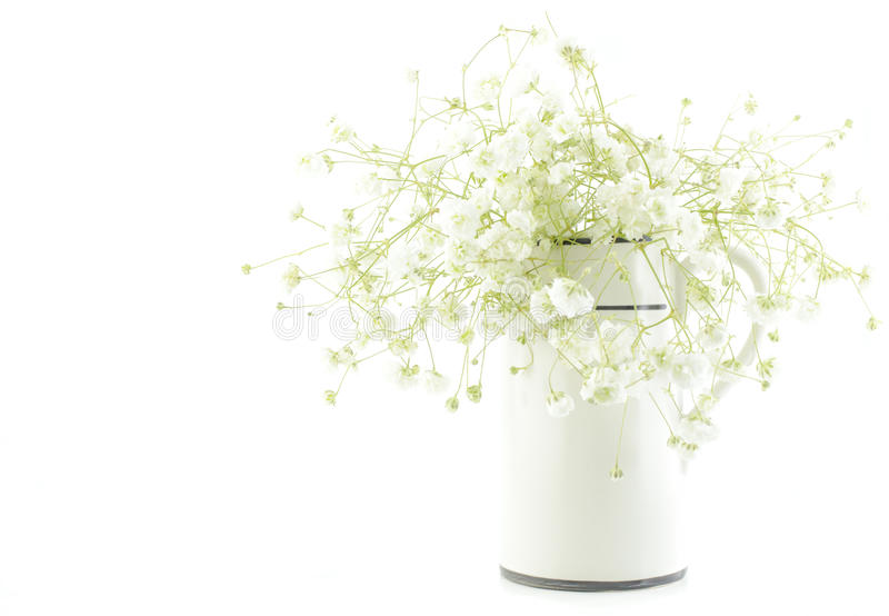 Gypsophila (Baby's-breath flowers), light, airy masses of small white flowers, process high key. Bouquet of white Gypsophila (Baby's-breath flowers), light royalty free stock images