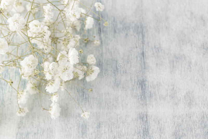 Gypsophila (Baby's-breath flowers), light, airy masses of small white flowers royalty free stock image