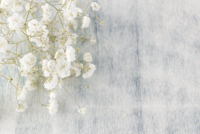 Gypsophila (fleurs de Chéri-souffle), lumière, les masses bien aérées de petites fleurs blanches image libre de droits