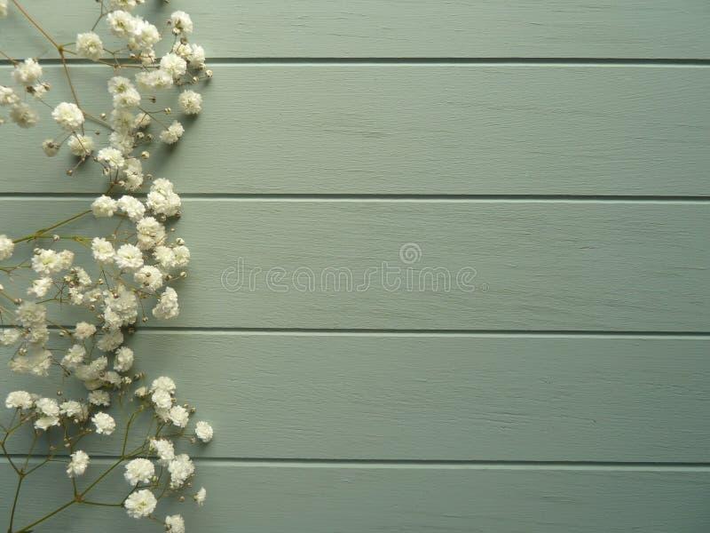 Gypsophilia blanc sur les conseils peints verts photos libres de droits