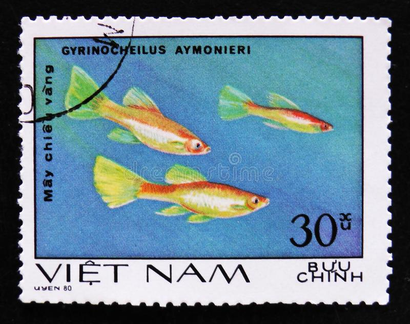 Gyrinocheilus aymonieri, Aquarium fishes serie, circa 1980. MOSCOW, RUSSIA - APRIL 2, 2017: A post stamp printed in Vietnam shows Gyrinocheilus aymonieri royalty free stock photos