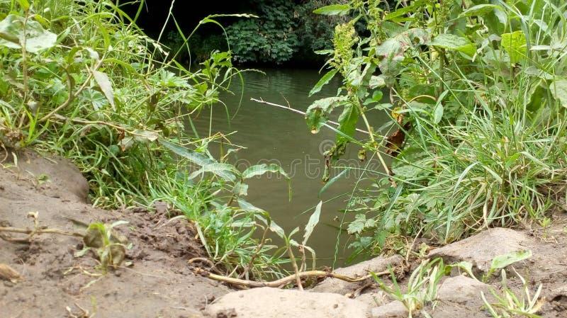 Gyttja vid en flod royaltyfri fotografi