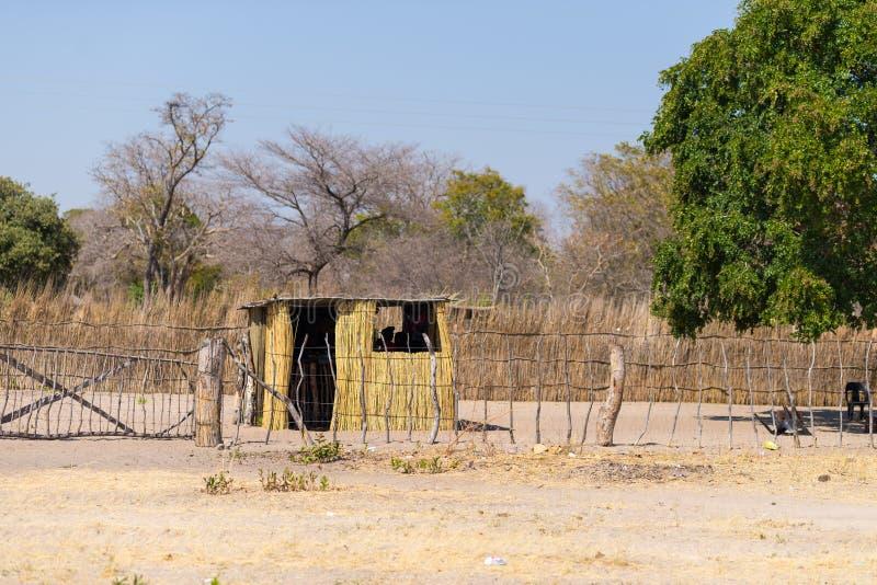Gyttjasugrör och träkoja med det halmtäckte taket i busken Lokal by i den lantliga Caprivi remsan, den mest befolkade regionen i  royaltyfri fotografi
