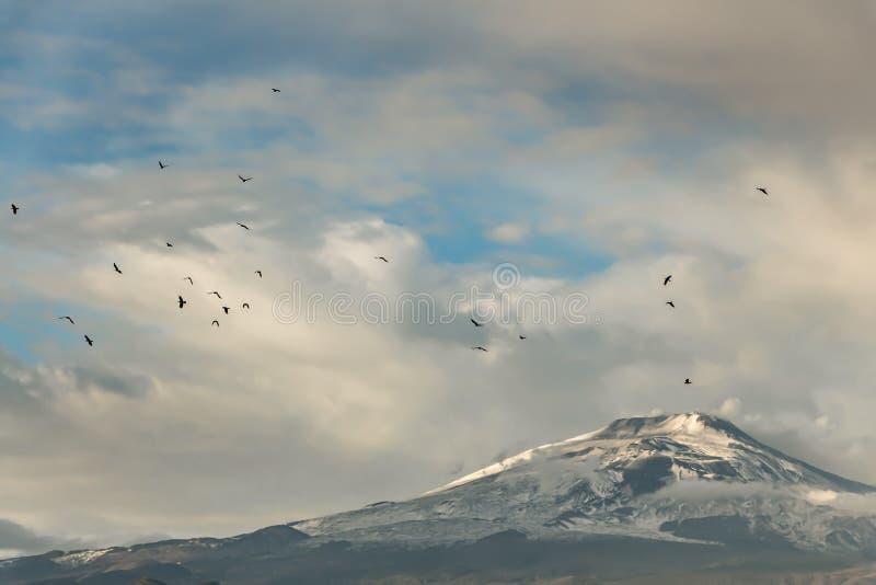 Há um rebanho de pássaros pretos no céu azul com as nuvens cor-de-rosa sobre o vulcão Etna com neve branca e o fumo amarelo no po imagens de stock