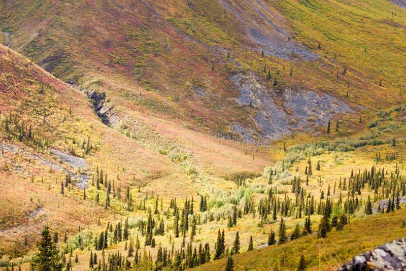 Hábitat alpino de la tundra en valle de la alta montaña foto de archivo