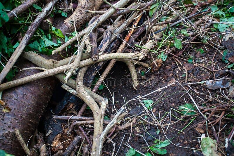 Hábitat del erizo en madera imagen de archivo