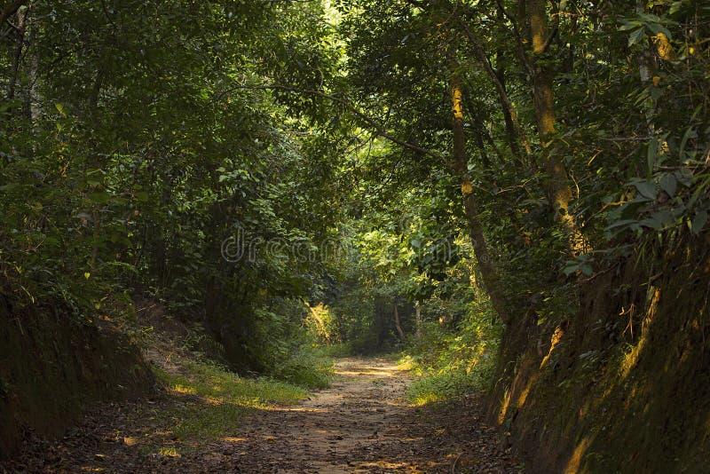 Hábitat del santuario de fauna de Trishna, Trishna, Tripura fotos de archivo