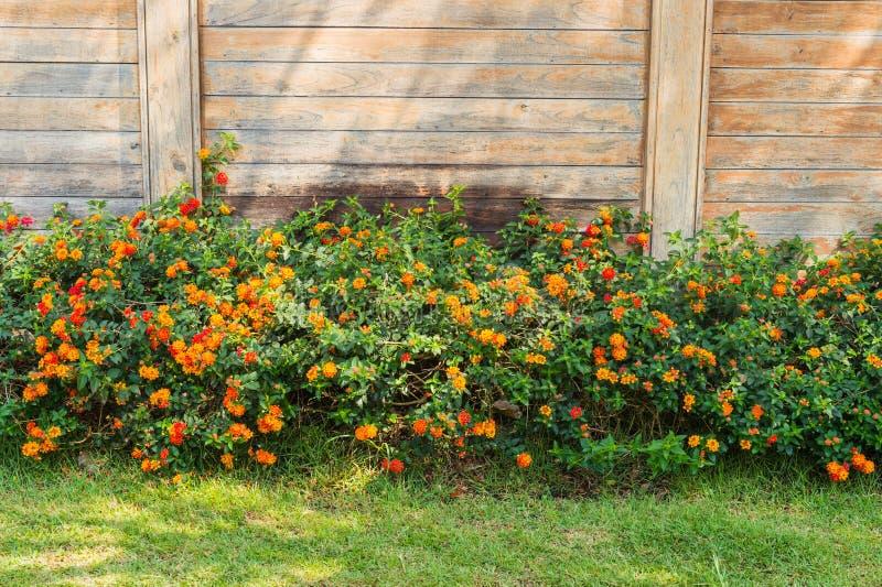 Häck av blommaväxt- och träbakgrund arkivbilder
