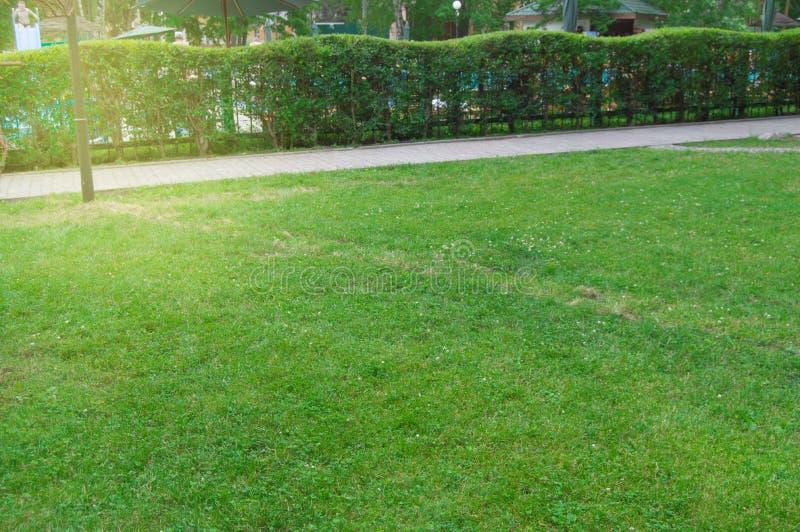 Häcken längs banan och gräsmatta med grönt gräs i parkerar, pittoresk ljus soluppgång i staden parkerar i sommar royaltyfri foto