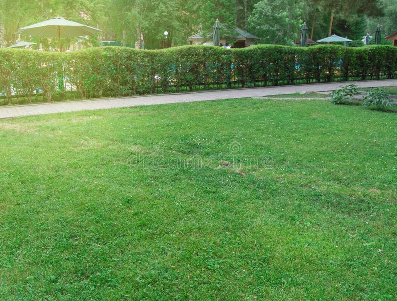 Häcken längs banan och gräsmatta med grönt gräs i parkerar, pittoresk ljus soluppgång i staden parkerar i sommar fotografering för bildbyråer