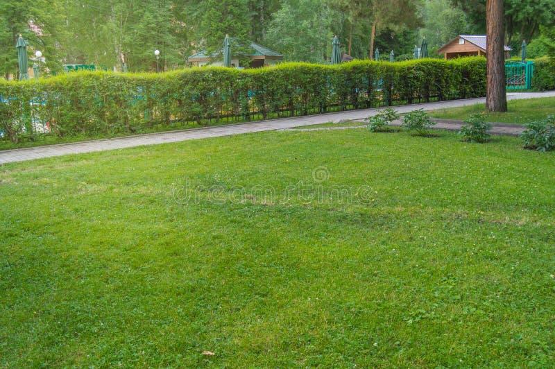 Häcken längs banan och gräsmatta med grönt gräs i parkerar, sceniska sikter i staden parkerar i sommar royaltyfri foto