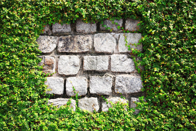 häckstenvägg royaltyfri fotografi
