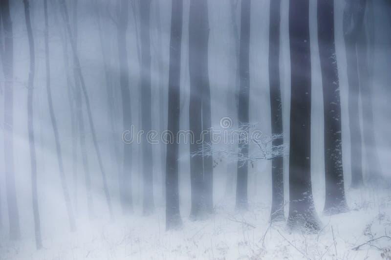 Häftig snöstorm i en skog med dimma och insnöad vinter royaltyfria bilder