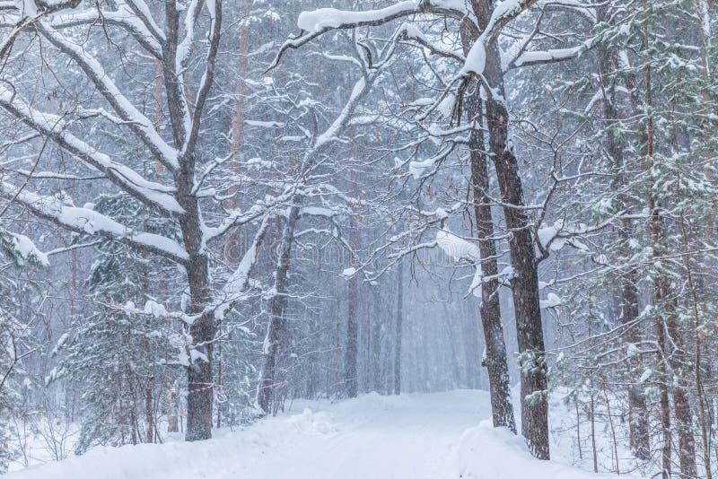 Häftiga snöstormen i vinterskogen eller att parkera med den fallande snön arkivbilder