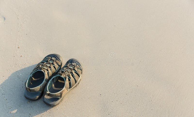 Häftklammermatare på stranden med kopieringsutrymme för sommarbakgrund arkivbild