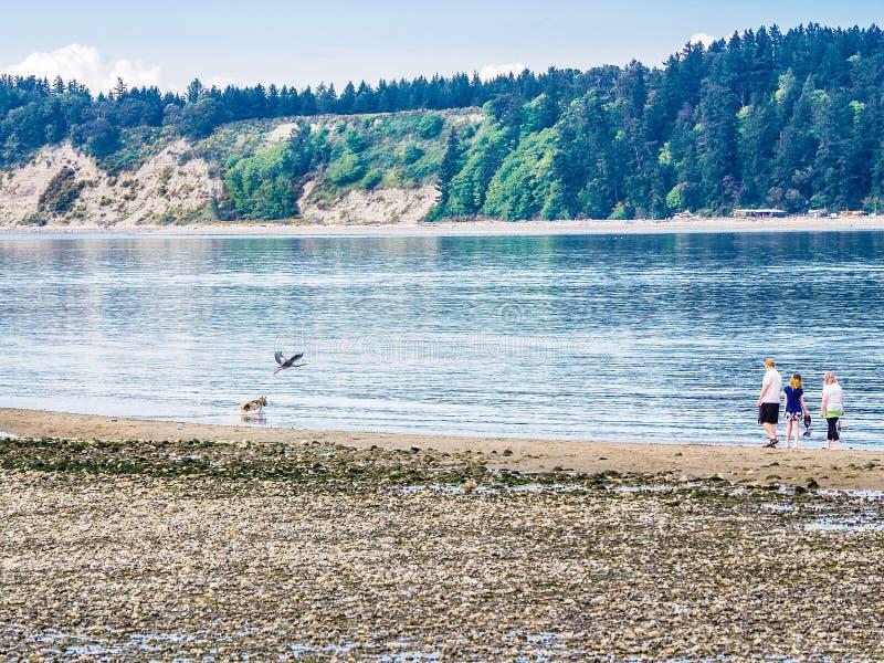 Häger och hundkapplöpning för stora blått på stranden royaltyfria bilder