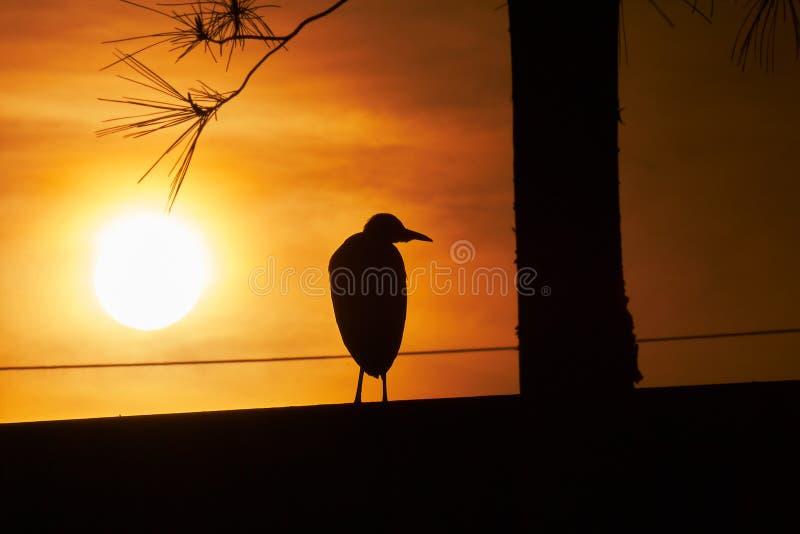 Hägeranseende i solnedgången i panelljus arkivfoton