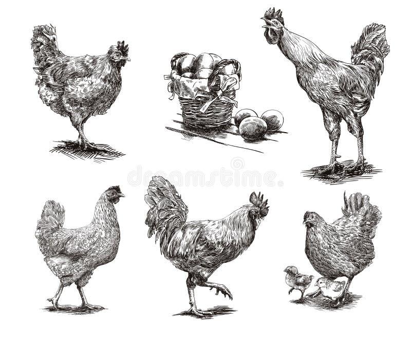 Hähne, Hennen und Hühner vektor abbildung