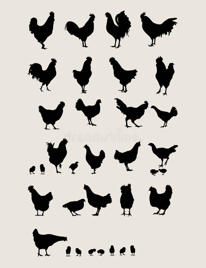 Hähne und Huhn lizenzfreie abbildung