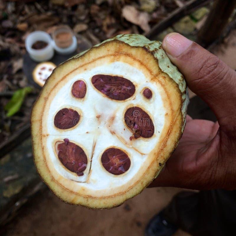 Hälfte von Kakaobohnen lizenzfreies stockbild