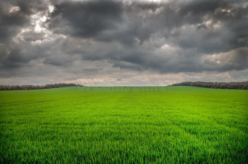Hällregn är kommande snart på grönt fält royaltyfria bilder