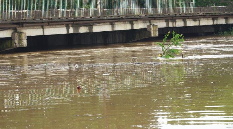 Hällregn i med flodvatten som täcker huvudvägen arkivbilder