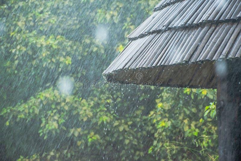 Hällregn i parkera arkivbild