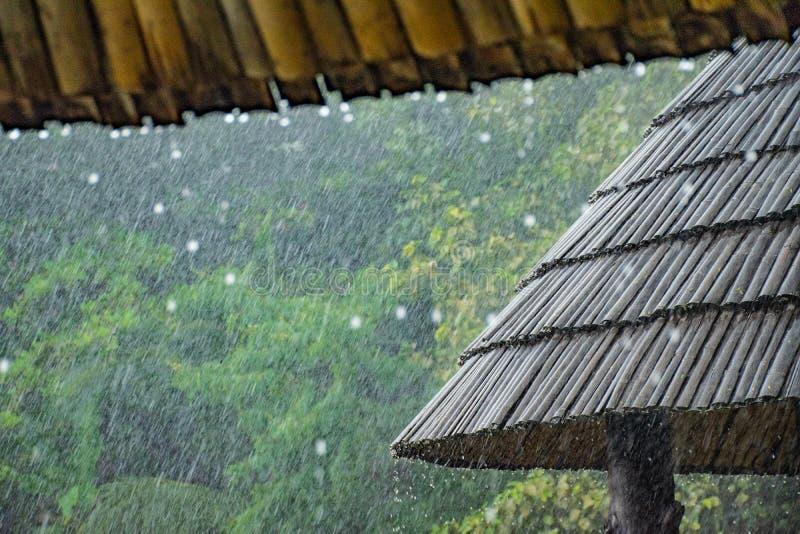 Hällregn på bambutaket fotografering för bildbyråer