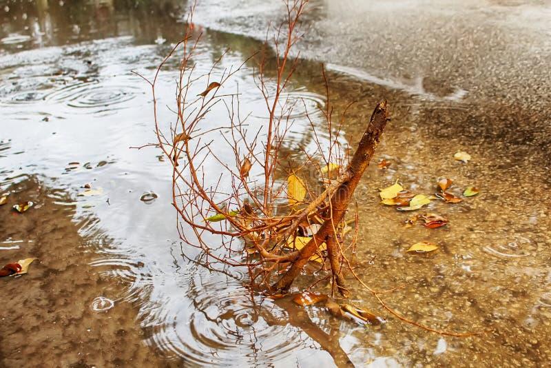 Hällregn vind En filial som är bruten från ett träd i en pöl av regnvatten Vinterväder i Israel arkivbilder