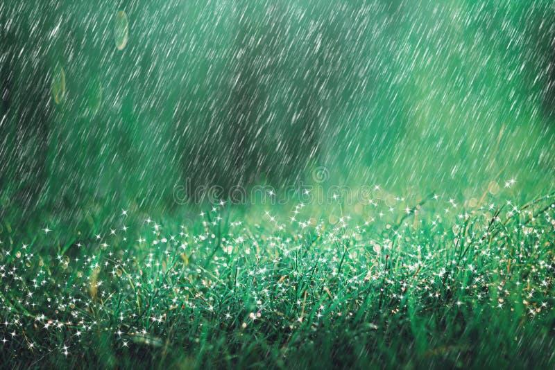 Hällregndusch på ängbakgrund med gnistrandet och bokeh Regna i naturbakgrund arkivfoto