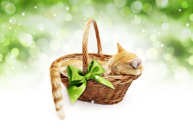 Hälsning- eller gåvakort, ljust rödbrun katt inom vide- korg med gree arkivbild