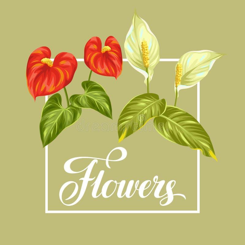 Hälsningkort med den blommaspathiphyllum och anthuriumen royaltyfri illustrationer