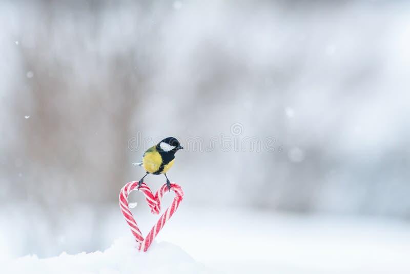 hälsningkortet med en gullig sångfågel flög in och satt ner på röda älskling-formade klubbor i vit snö på valentin fotografering för bildbyråer