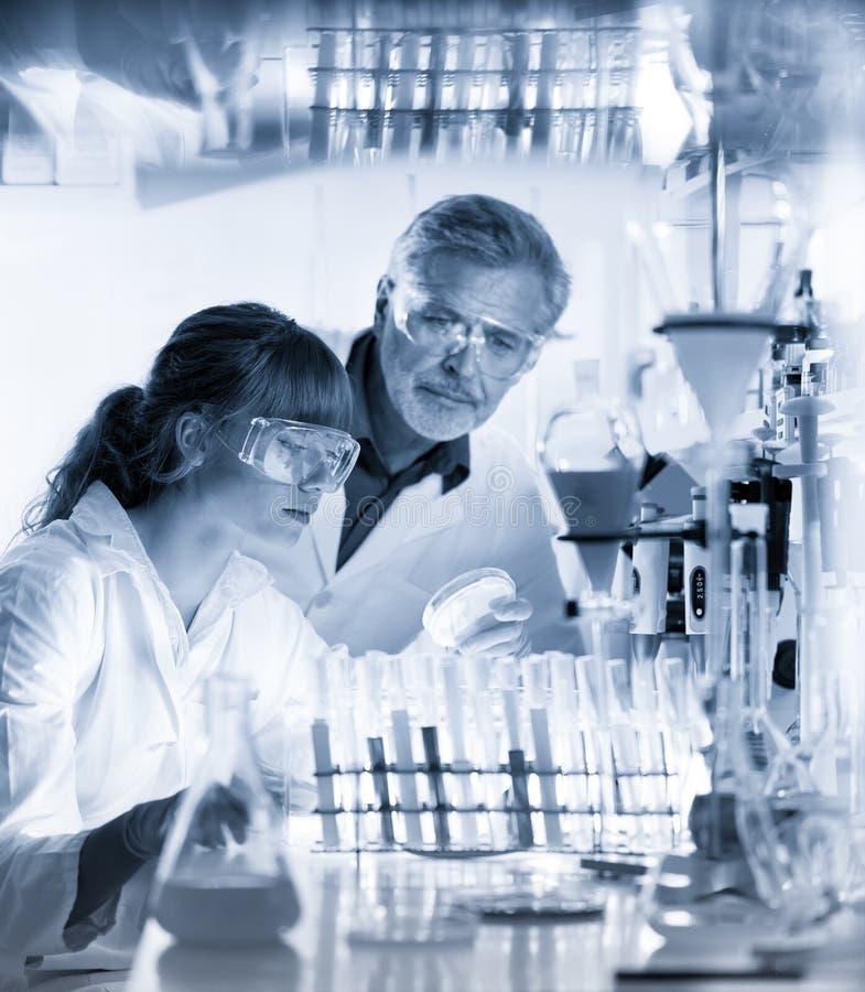 Hälsovårdprofessionell som forskar i vetenskapligt laboratorium royaltyfri foto