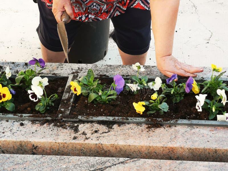 Händchen, die Blumen anordnen und anpflanzen lizenzfreie stockfotografie