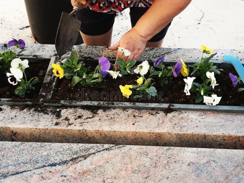 Händchen, die Blumen anordnen und anpflanzen lizenzfreie stockbilder