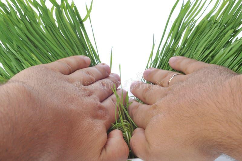 Hände breiteten frisches Gras aus stockbild