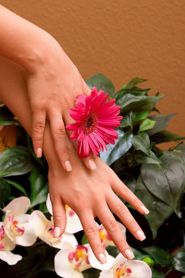 Hände der Frau mit Maniküre lizenzfreies stockbild