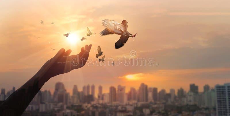 Hände des Frauenbetens und des freien Vogels Natur auf Stadtsonnenunterganghintergrund, Hoffnungskonzept genießend lizenzfreie stockbilder