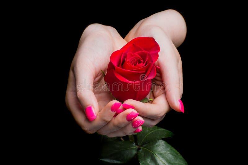 Hände des Mädchens Rotrose auf Schwarzem sorgfältig halten lizenzfreie stockfotos