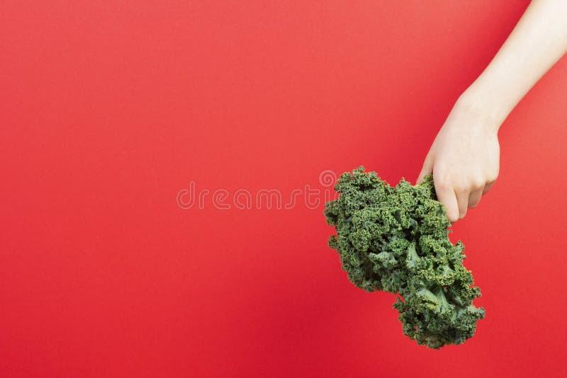 Hände, die ein Bündel Kohlblätter über rotem Hintergrund halten stockbilder