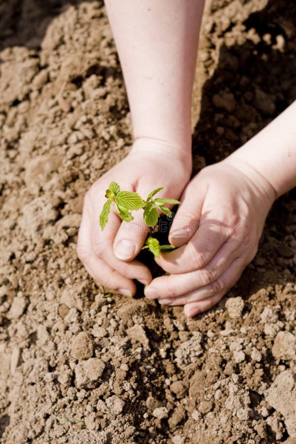 Hände, die einen Baum pflanzen stockbilder