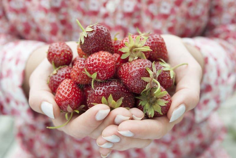 Hände, die frische Erdbeeren halten lizenzfreies stockfoto