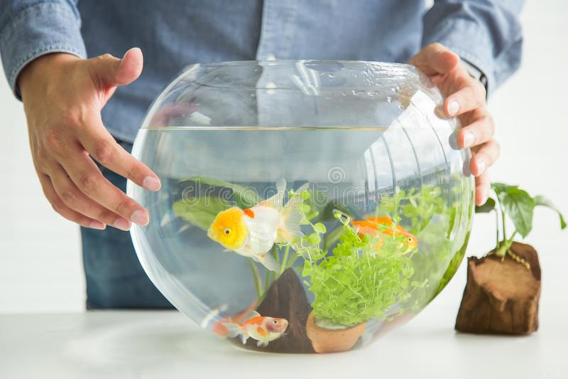 Hände, die Goldfisch in der Schüssel bewundern stockfotos