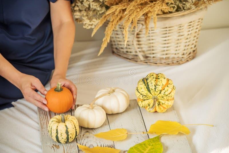 Hände eines decarning Herbststilllebens des Mädchens Minikürbise von verschiedenen Farben und ein Korb mit Trockenblumen stockfotografie