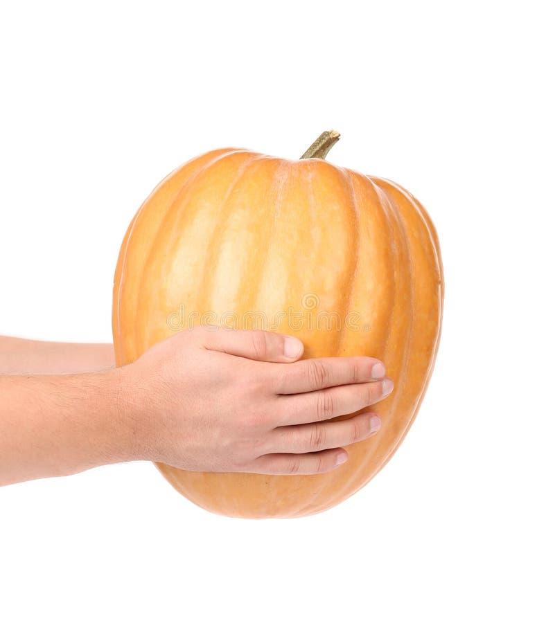 Hände halten frischen orange Kürbis stockbild